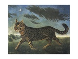 Tabby Cat Walking at Night