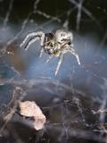 Spider in Etosha National Park