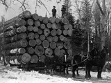 Horses Hauling Huge Load of Logs