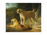 A Tiger and Tigress at the Exeter 'Change Menagerie in 1808
