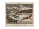 Sleigh in Lapland