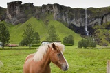 Icelandic Horse Near Waterfall
