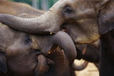 Orphaned Elephants at Play