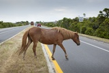 Wild Horse Crossing Road