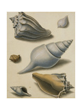 Studies of Shells and Marine Flora