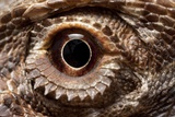 Eye of an Inland Bearded Dragon