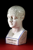 A Porcelain Phrenology Head