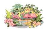 Flamingos in the Tropics