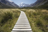Wooden Path Through Mount Cook National Park