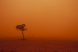 Dust Storm in the Australian Outback