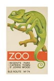 Zoo, Iguana London Bus Route No. 74 Advertising Poster Giclée