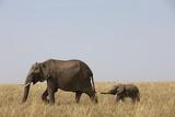 Elephants and Calf in Savanna