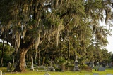 Gravestones and Trees Draped in Spanish Moss in Bonaventure Cemetery  Savannah  Georgia