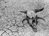 Cattle Skull on the Parched Earth Papier Photo par Arthur Rothstein