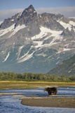 Grizzly Bear Hunting in Stream at Kukak Bay