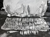 Moose Antlers and Fish on Display after Trip  Ca 1948