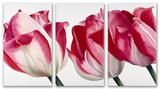 Fresh Pink Tulips Triptych Art