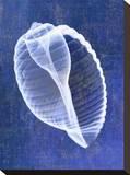 Banded Tun Shell (indigo)