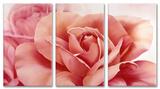 Pretty in Pink Flower Triptych Art