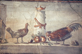 Italy  Naples  Naples National Archeological Museum  Rooster and Hen