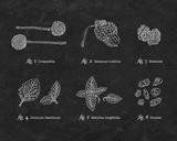 Artifact Series: The Naturalist Poster