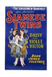 Poster Advertisement for Siamese Twins Daisy and Violet Hilton Giclée