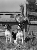 1940s Pair of English Springer Spaniels Sitting in Front of Post and Rail Fence Next to Shotgun