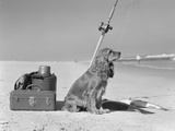 Cocker Spaniel Dog Standing Guard over Two Caught Fish and Fishing Equipment