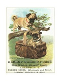 Albany Rubber House Advertisement