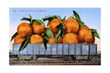 A Carload of Navel Oranges Postcard