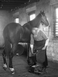 1930s Elderly Bearded Blacksmith Shoeing Horse Holding Hoof Between Legs and Hammer in Other Hand