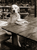 1930s Dog Mixed Breed Sitting Like Human Being at Outdoor Picnic Table