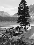 1920s-1930s Group Camping in Tents Horses with Riding Gear in Background Mountains