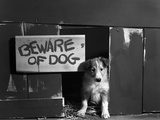 1960s Collie Dog Puppy Sitting in Door of Doghouse Beware of Dog Sign