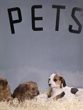 1960s Puppy Dogs for Sale in Pet Store Window