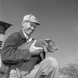 1950s Smiling Man Farmer Wearing Striped Overalls Holding Duroc Piglet on His Knees
