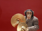 1960s Chimpanzee Wearing Suit and Tie Playing Cymbals