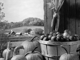 1960s Barn Door Corn Apples Pumpkins Autumn Harvest Time