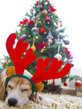 Sleeping Beagle Dog Wearing Christmas Antlers