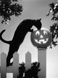 1970s Black Cat and Jack-O'-Lantern on Fence