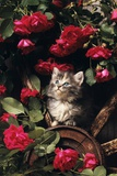 1980s Blue Calico Longhaired Kitten Amid Red Roses