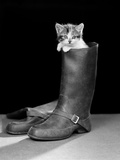 1950s Puss in Boots Cute Kitten Climbing Out of Man's Boot