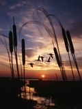 1980s Silhouetted Ducks Flying in Sunset