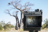 Baobab Tree Viewed Through Speed Graphic  Nxai Pan National Park  Botswana