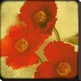 Fresh Poppies II