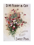 DM Ferry and Co's Superb Mixed Sweet Peas Poster