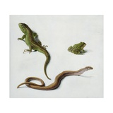 Studies of a Lizard  Snake and Frog