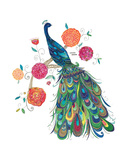Splendid Peacock
