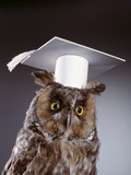 1990s Wise Old Owl Wearing White Mortarboard Graduation Cap