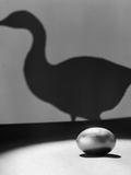 1930s-1940s Still Life of Golden Egg in Spotlight in Foreground with Silhouette of Goose on Wall